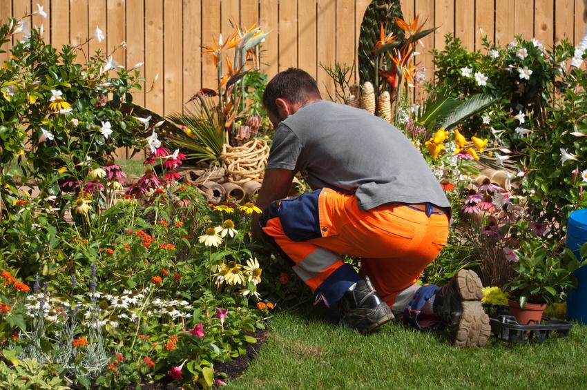 Dan, Jardinier à Toulouse